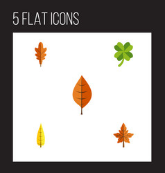 flat icon leaf set of foliage alder linden and vector image