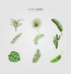 green plant leafs design vector image