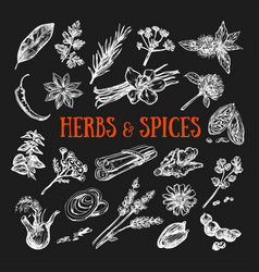 herbs and spices condiments 2 vector image