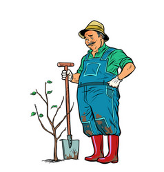 old gardener plants a seedling isolate on white vector image