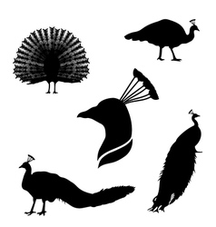 peacockSet vector image