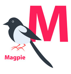 Pink letter m ordinary or european magpie on abc vector