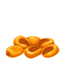 Salted roasted corn nuts vector