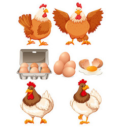 Chickens and fresh eggs vector image