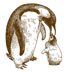 Engraving drawing of emperor penguin and nestling vector