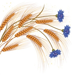 flowers and ears of wheat vector image