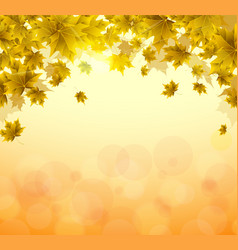 frame yellow and orange leaves maple sunny vector image