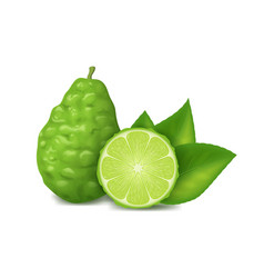 realistic 3d detailed whole green kaffir lime with vector image