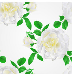 seamless texture white rose with buds and leaves vector image