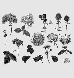 Vintage monochrome floral set of natural elements vector