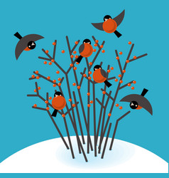 bullfinch in the bushes vector image vector image