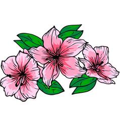 Azalea flowers indoor plant vector