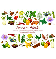 Chilli pepper cinnamon garlic spice and herbs vector