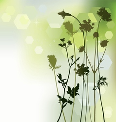 Floral background dandelion and herbal vector
