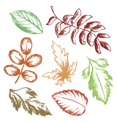 set of autumn leaves hand drawn sketches vector image