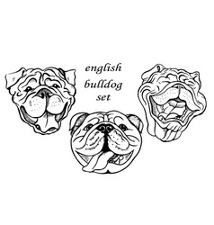english bulldog set vector image