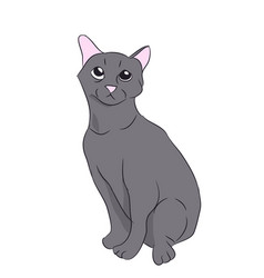 cat color vector image