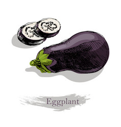 eggplant on white background colorful vector image