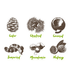 engraved organic exotic fruits and nuts vector image
