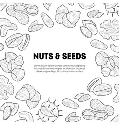 natural nuts and seeds banner template with place vector image
