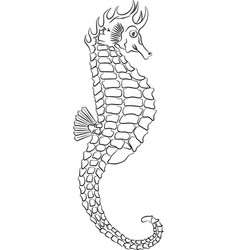seahorse outline vector image