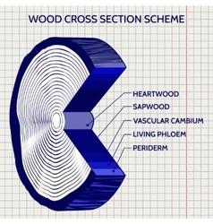 Sketch of wood cross section scheme vector image