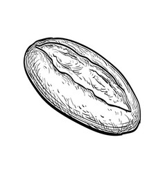 loaf of bread vector image