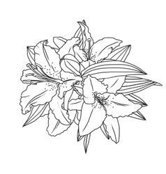 lily flowers and leaves vector image