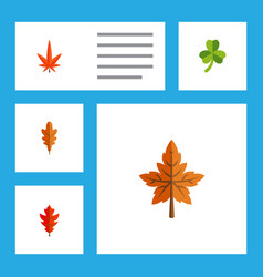 Flat icon leaf set of leaf linden frond and vector