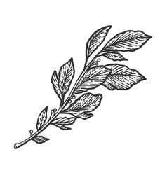 Laurel branch sketch engraving vector