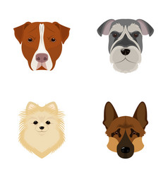 Muzzle of different breeds of dogsdog breed vector