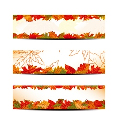 Set of Colorful Autumn Leaves Banner vector image