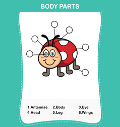 lady bug vocabulary part of body vector image vector image