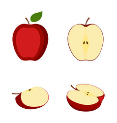 Apple whole fruit halves and slice vector