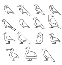 bird ilustration collection vector image