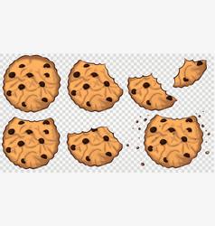bitten cookies with chocolate chip vector image