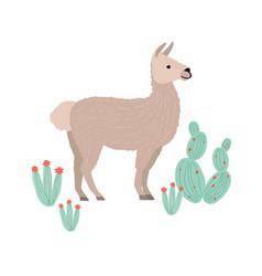 Charming llama cria or alpaca isolated on white vector
