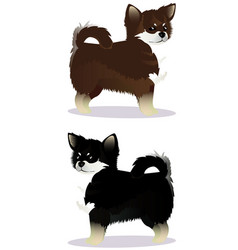 chihuahua dog black and white brown and white vector image