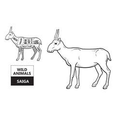 Cut of antelope set poster butcher diagram vector