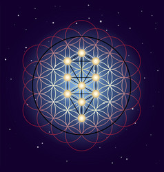 flower and tree life sacred geometry on starry vector image