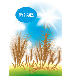 Rye field with the blue sky and the sun vector