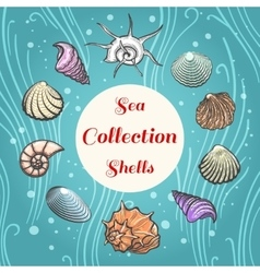 Sea shells composition with text vector image