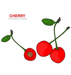 cherry fruits vector image