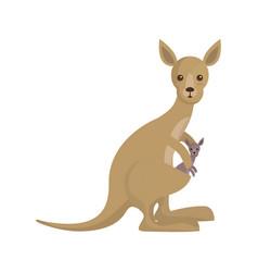 Cute kangaroos icon image vector