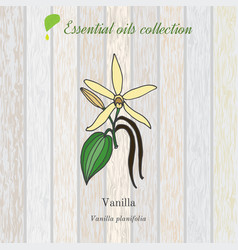 vanilla essential oil label aromatic plant vector image