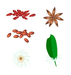 A Set of Star Anise on White Background vector