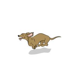 dachshund dog running vector image