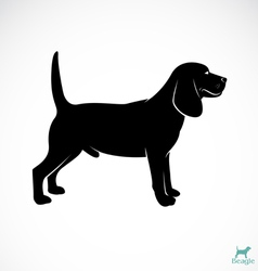dog beagle vector image