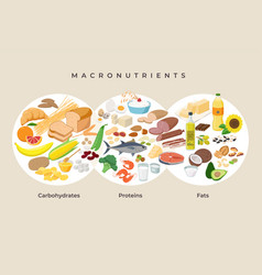 Main food groups - macronutrients carbohydrates vector