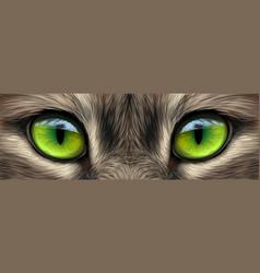 Big eyes eyes a domestic cat close-up vector